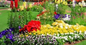 цветы летники