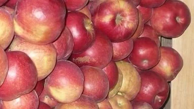 Айдаред яблоня